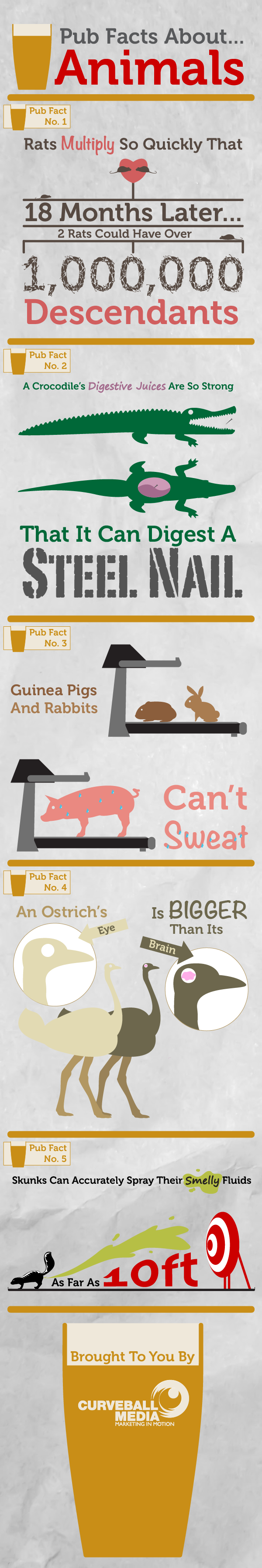 5 Pub Facts About Animals