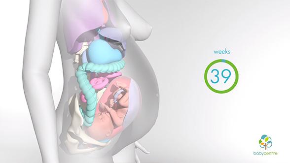 Baby Center Pregnancy Explainer